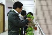 興大辦第三屆綠手指傳習 百位師生齊種班草班花