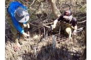 興大生科系揭開紅樹林儲存藍碳之秘