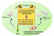 喝酒礙胃 興大實驗:苦茶油可減緩急性胃黏膜損傷