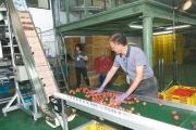 上銀與中興大學合推保鮮荔枝 首批外銷日本
